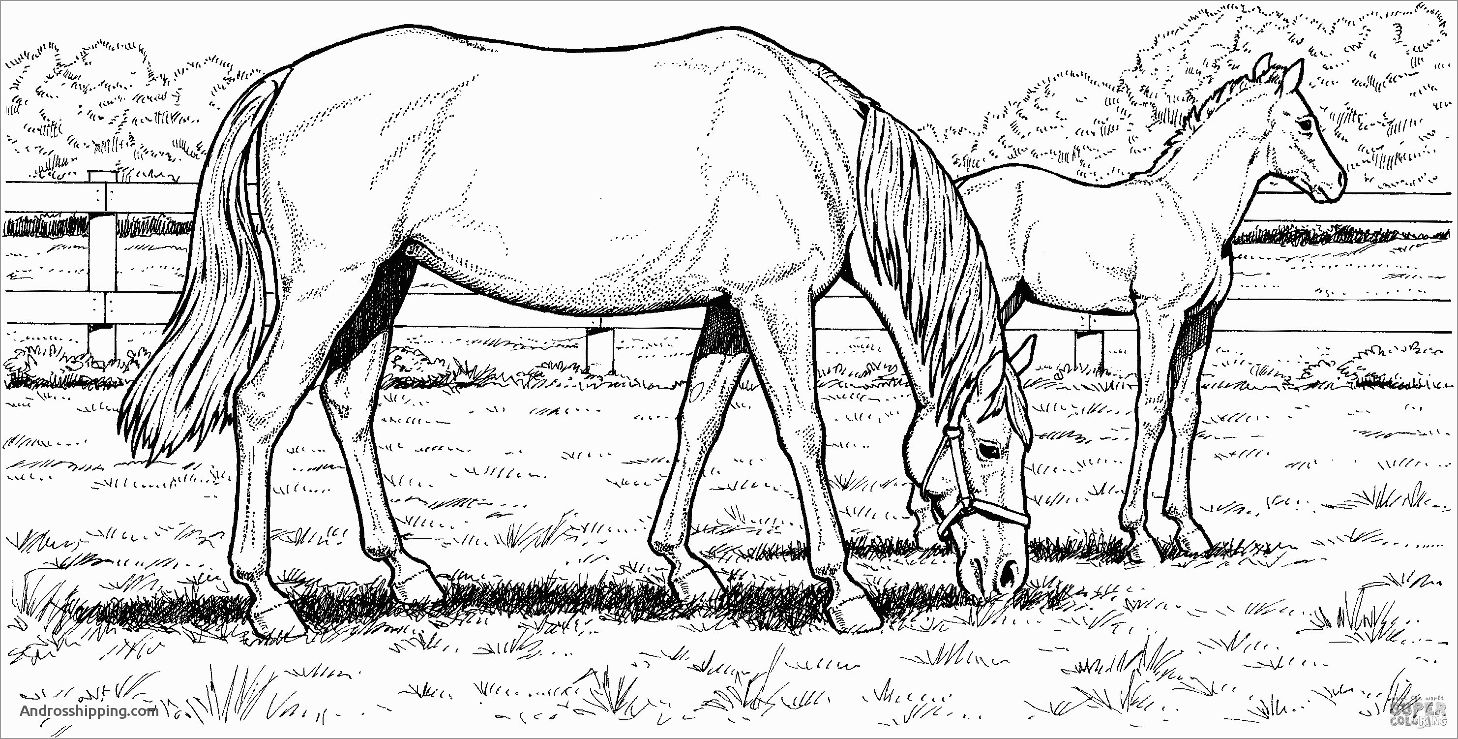 15 Inspirational Free Coloring Pages for Horses androsshipping