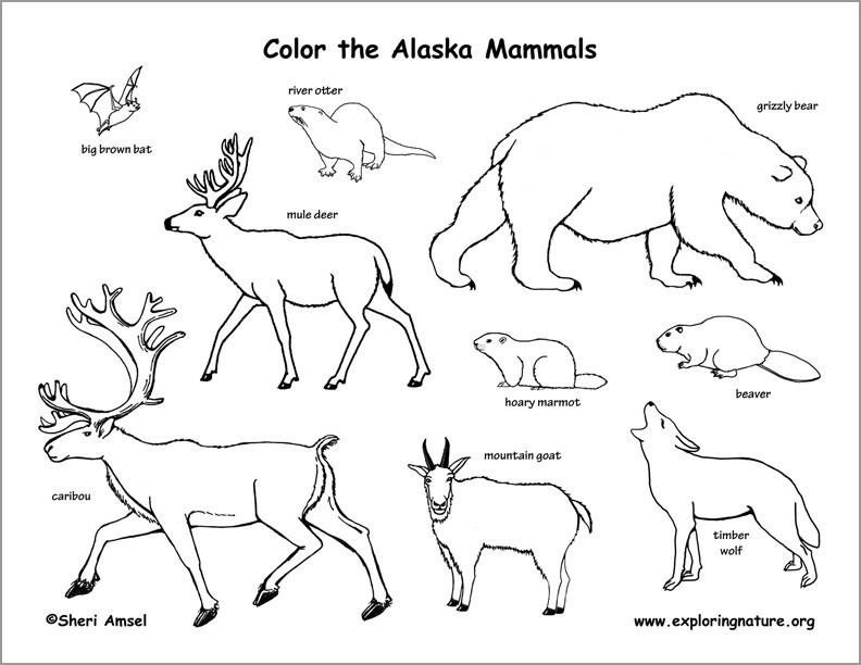 Alaskan Mammals Coloring Page