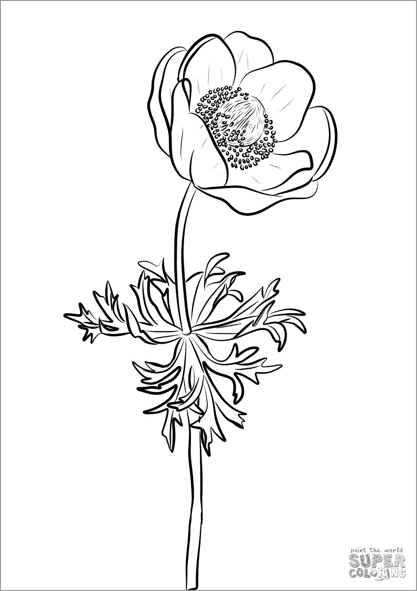 Anemone Flower Coloring Page