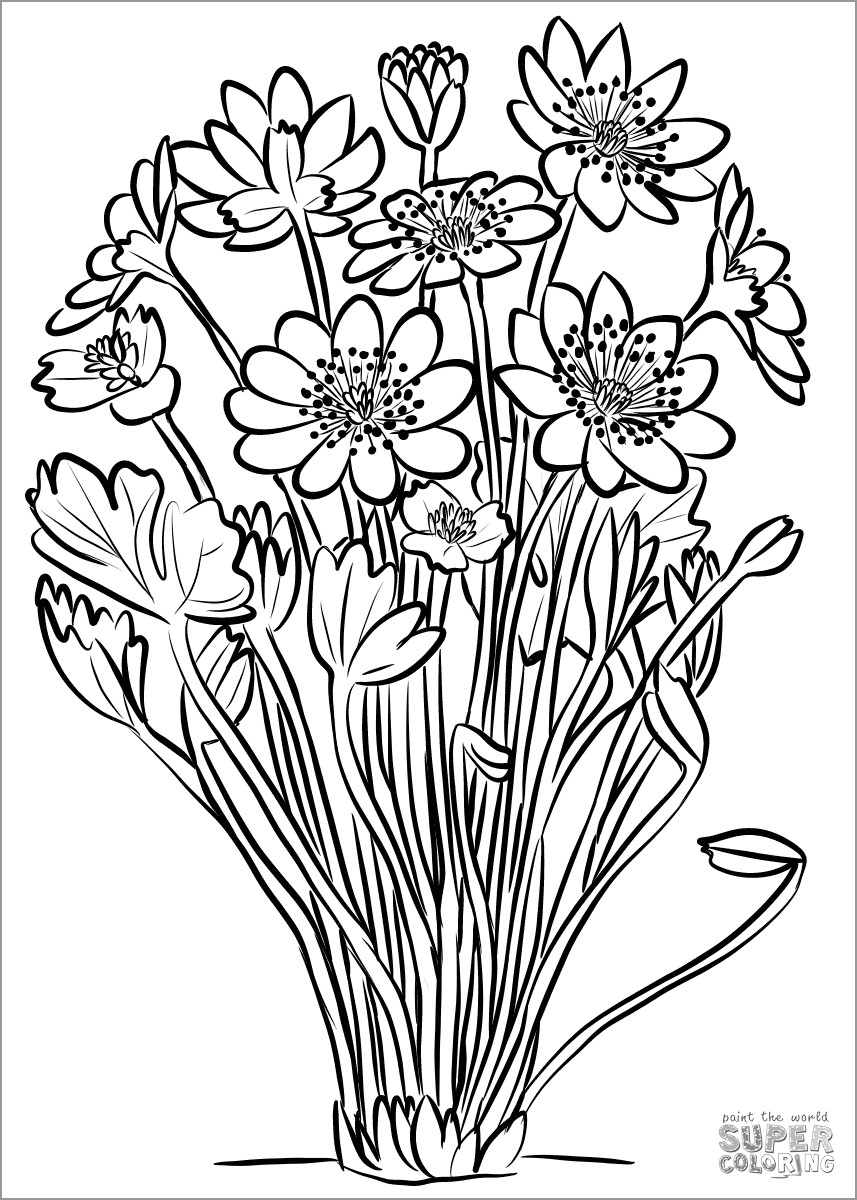 Anemone Transsilvanica Coloring Page