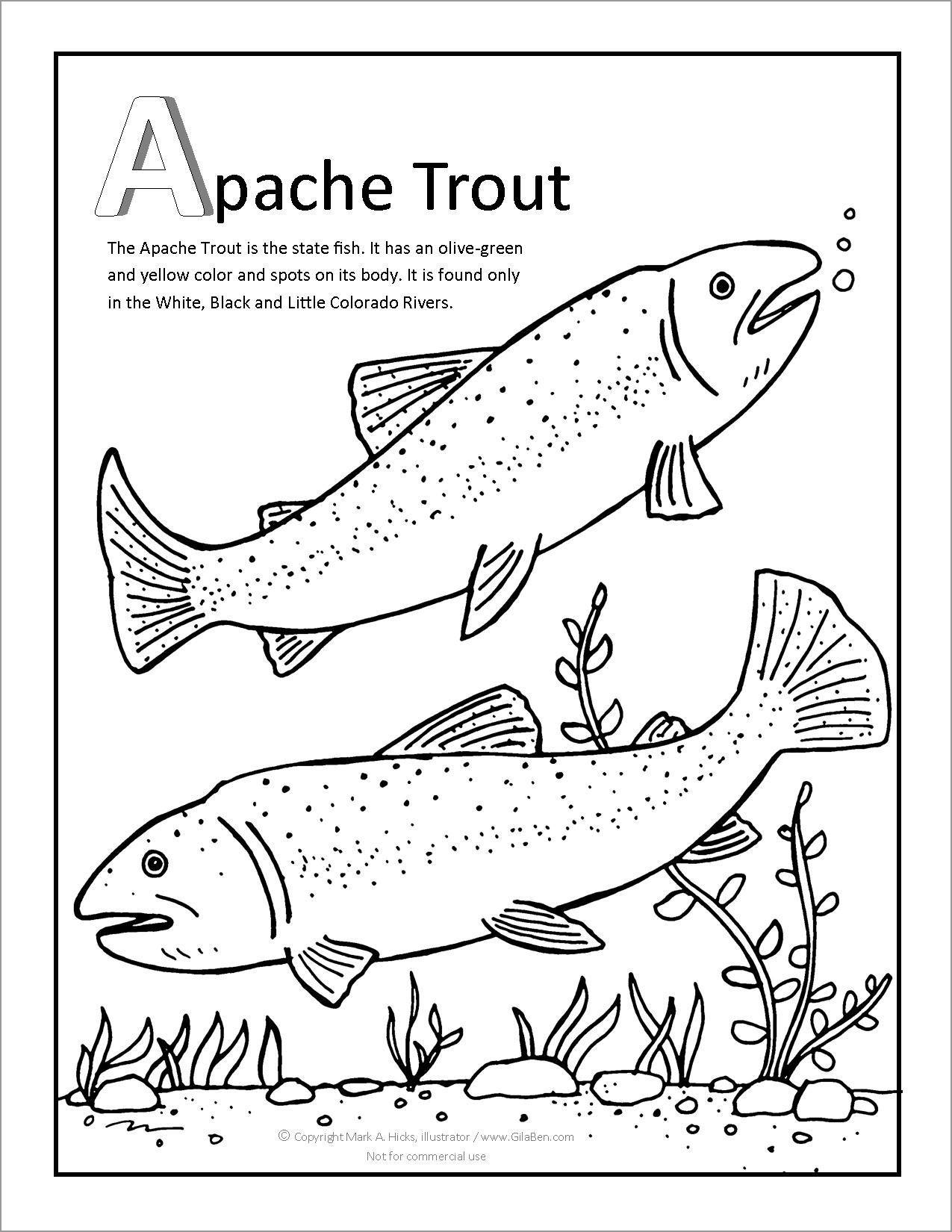 Apache Trout Coloring Page