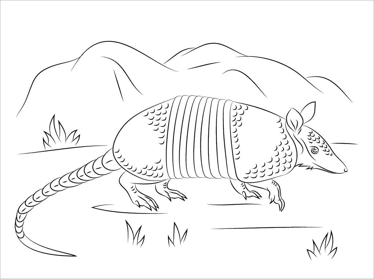 Armadillo Walking on The Grass Coloring pages