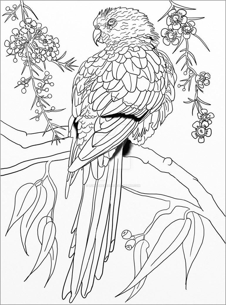Australian Parrot Coloring Page