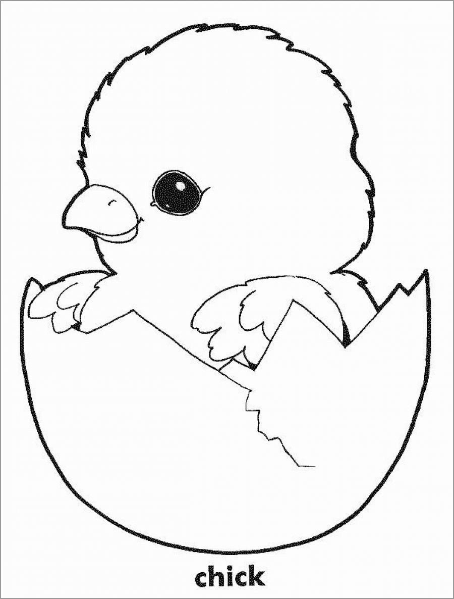 Baby Chick Coloring Page