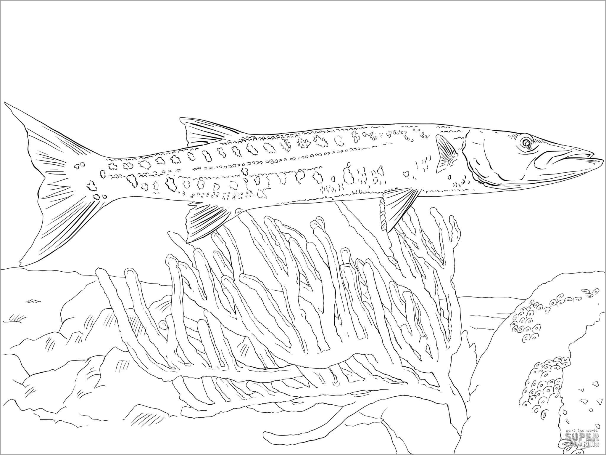 Barracuda Fish Coloring Page