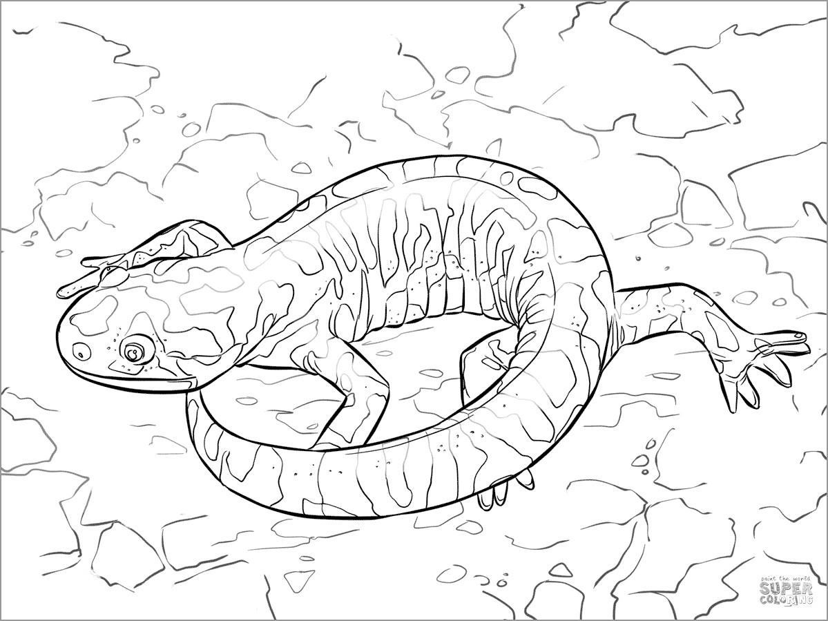 Barred Tiger Salamander Coloring Page