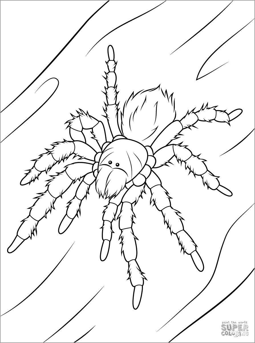 Chilean Rose Tarantula Coloring Page