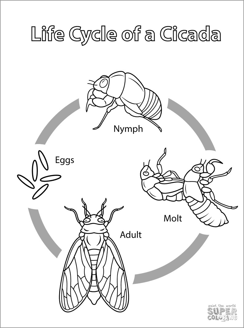 Cicada Life Cycle Coloring Page