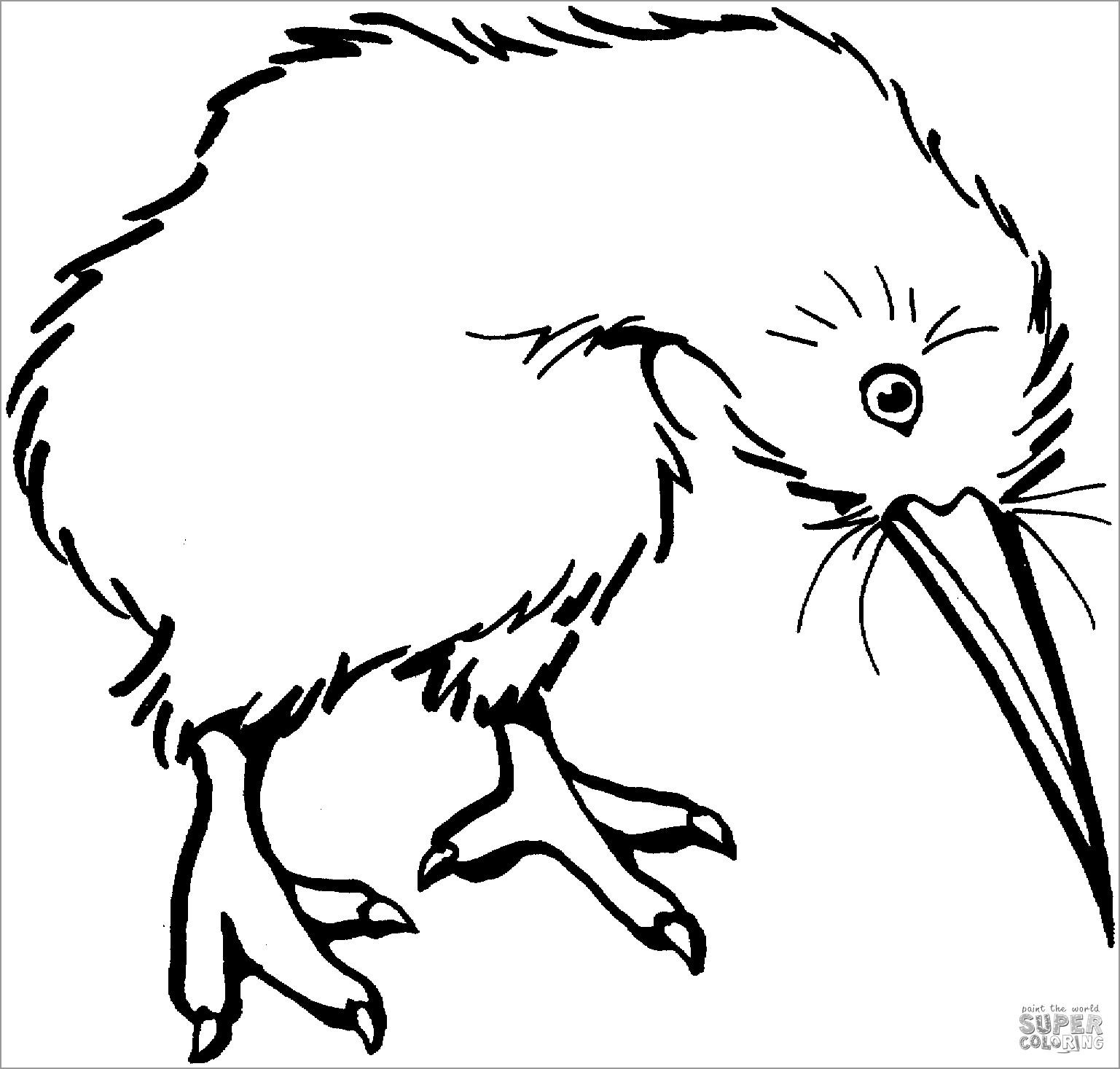 Coloring Page Of Kiwi Bird
