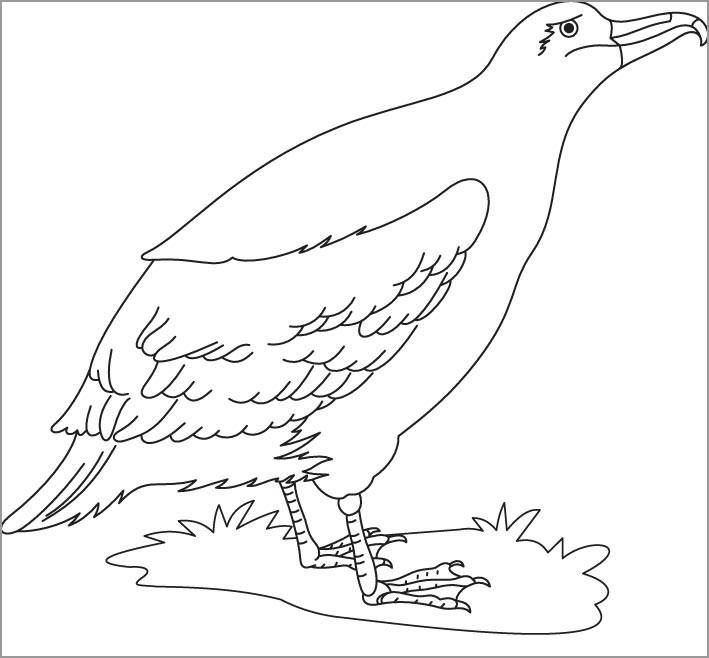 Cute Albatross Bird Coloring Page