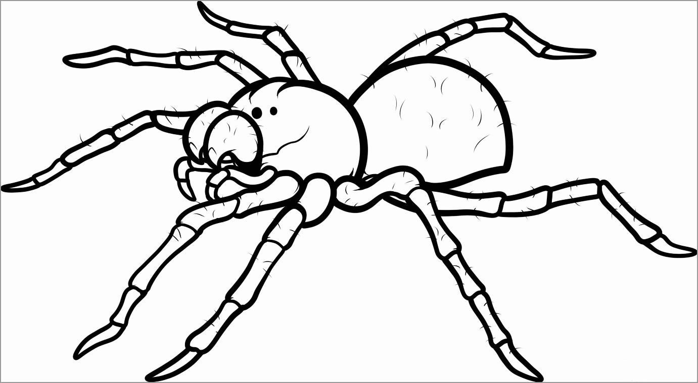 Cute Tarantula Coloring Page