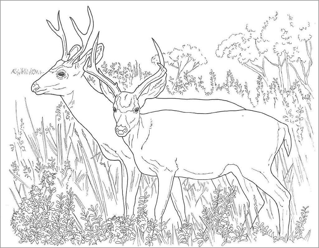 Deer Antler Coloring Page