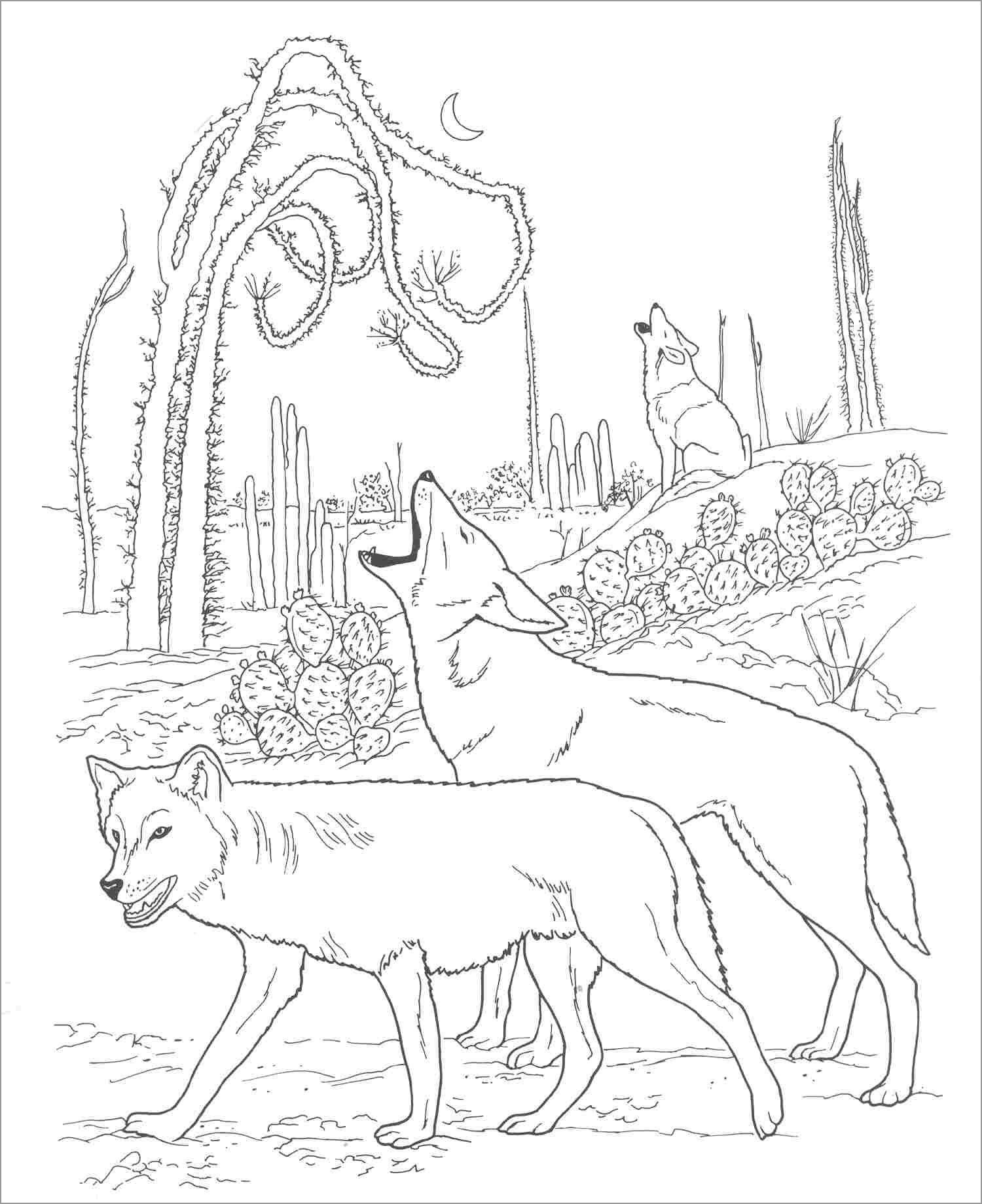 Desert Coyote Coloring Page