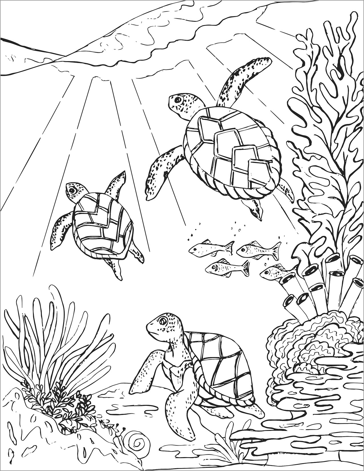 Detailed Turtle Coloring Page for Adult