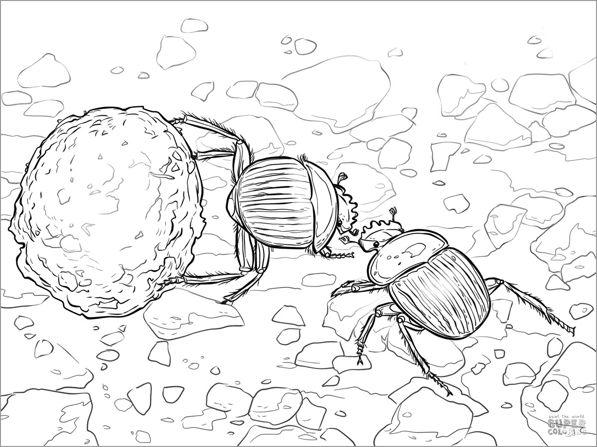 Dung Beetle Coloring Page
