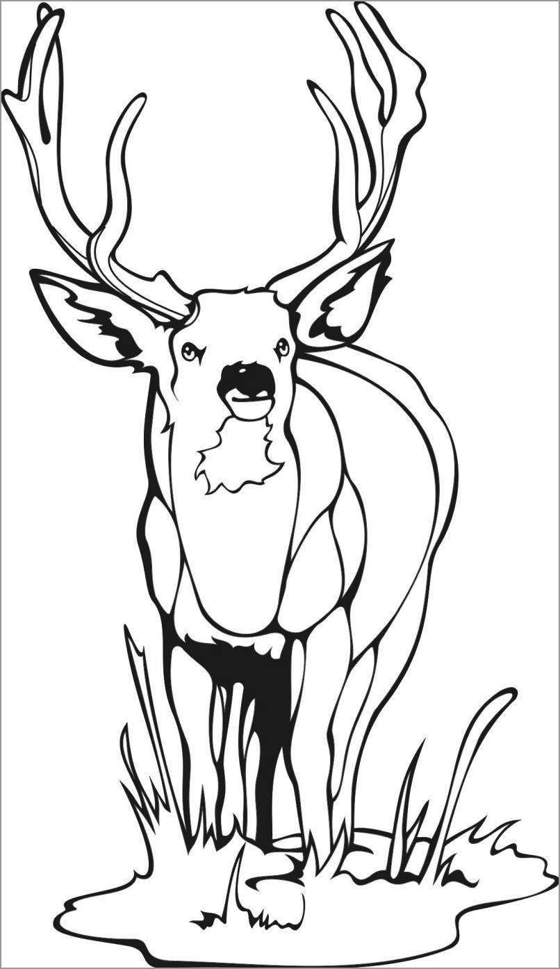 Easy Deer Coloring Page