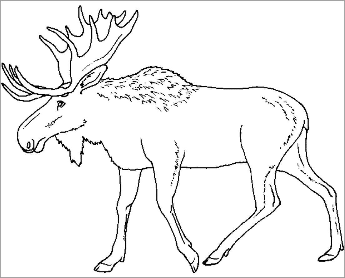Elk Moose Caribou Coloring Page