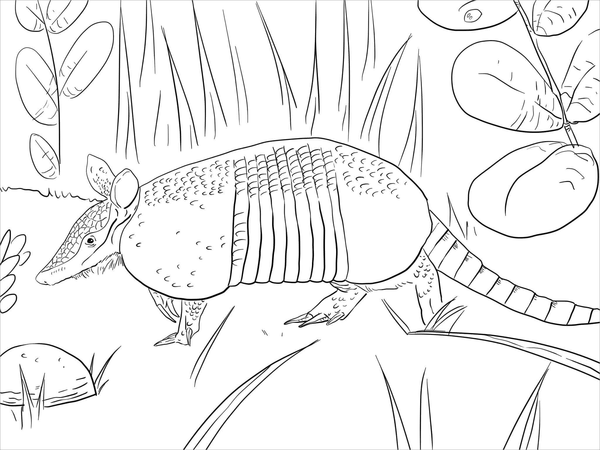 Free Printable Armadillo Coloring Pages