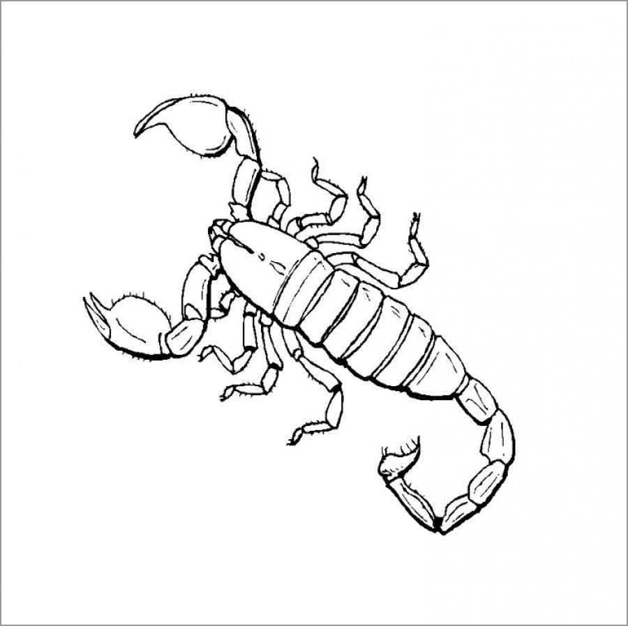 Free Scorpions Coloring Page to Print