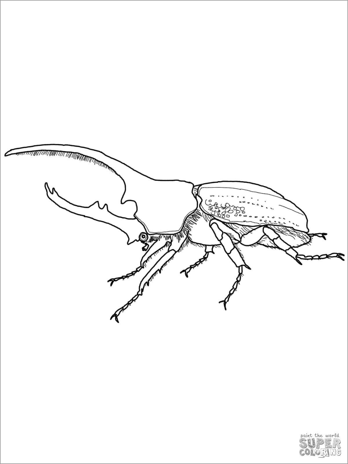 Hercules Beetle Coloring Page