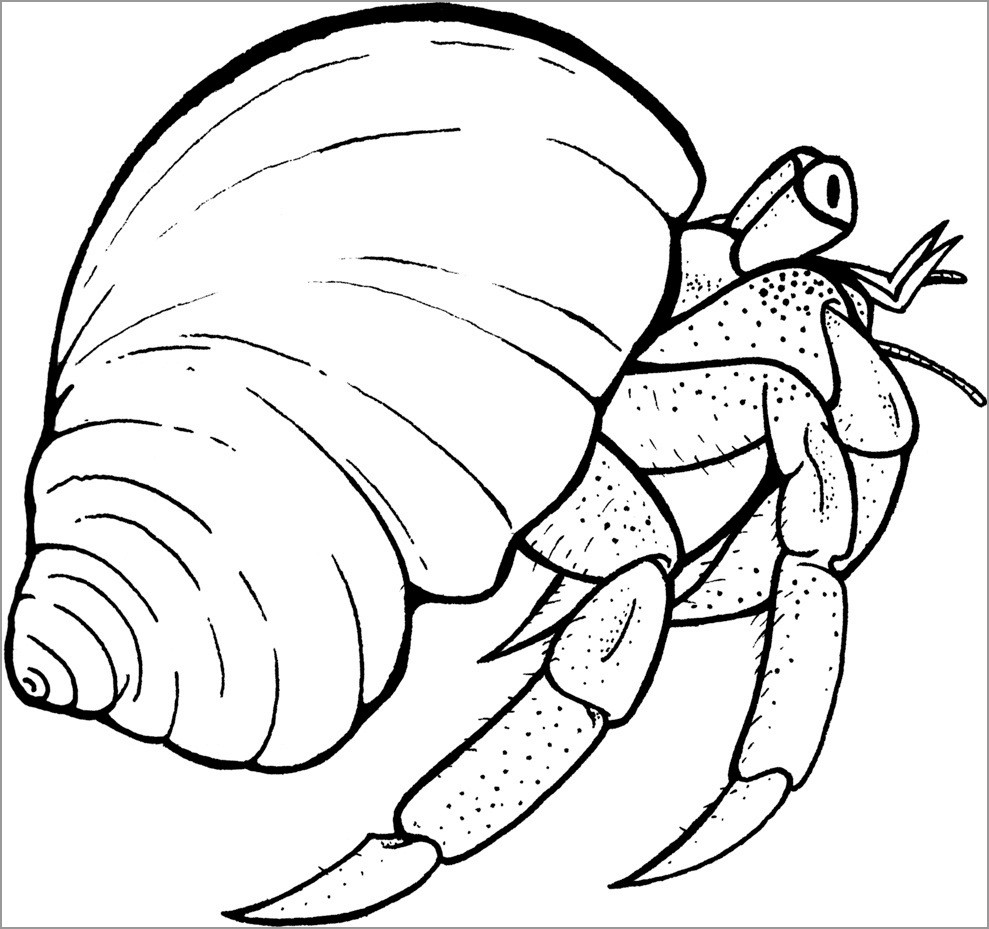 Hermit Crab Shell Coloring Page