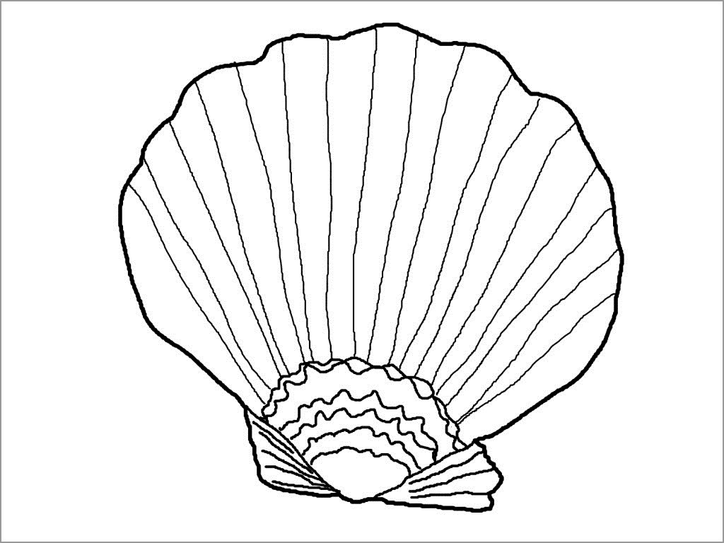 Image Of Seashell Coloring Page to Print