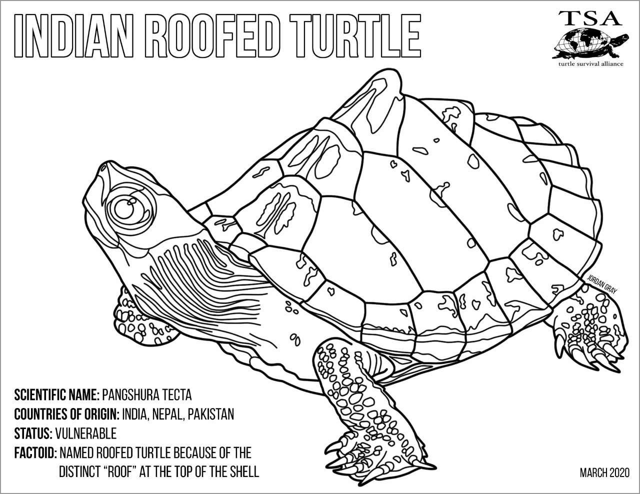 Indian Roofed Turtle Coloring Page