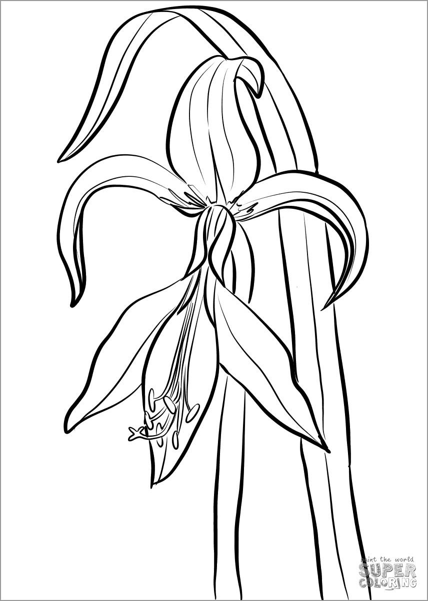 Jacobean Amaryllis Coloring Page
