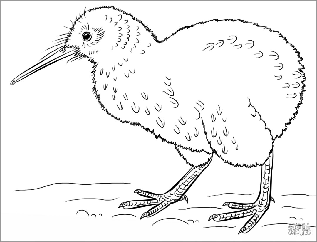 Kiwi Bird Coloring Page to Print