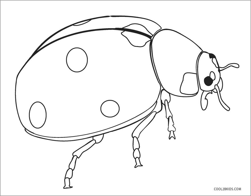 Ladybug Coloring Page Free