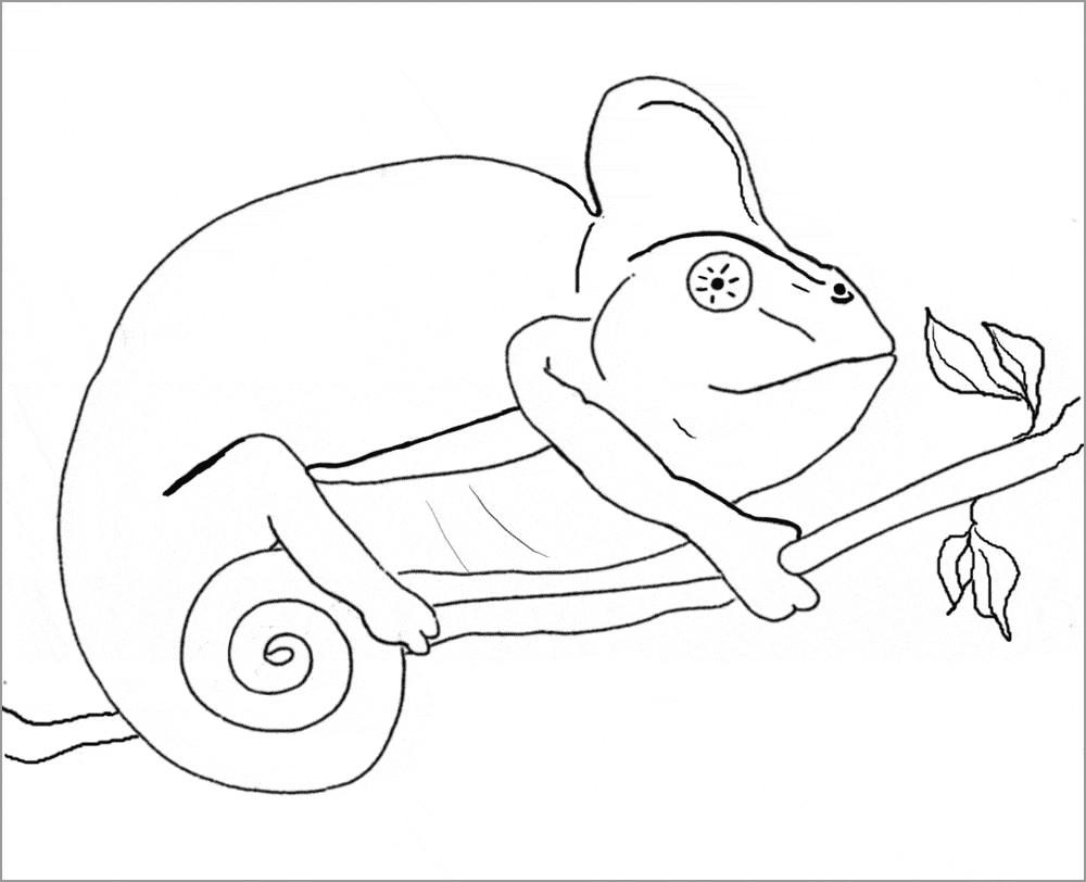 Marbled Salamander Coloring Page