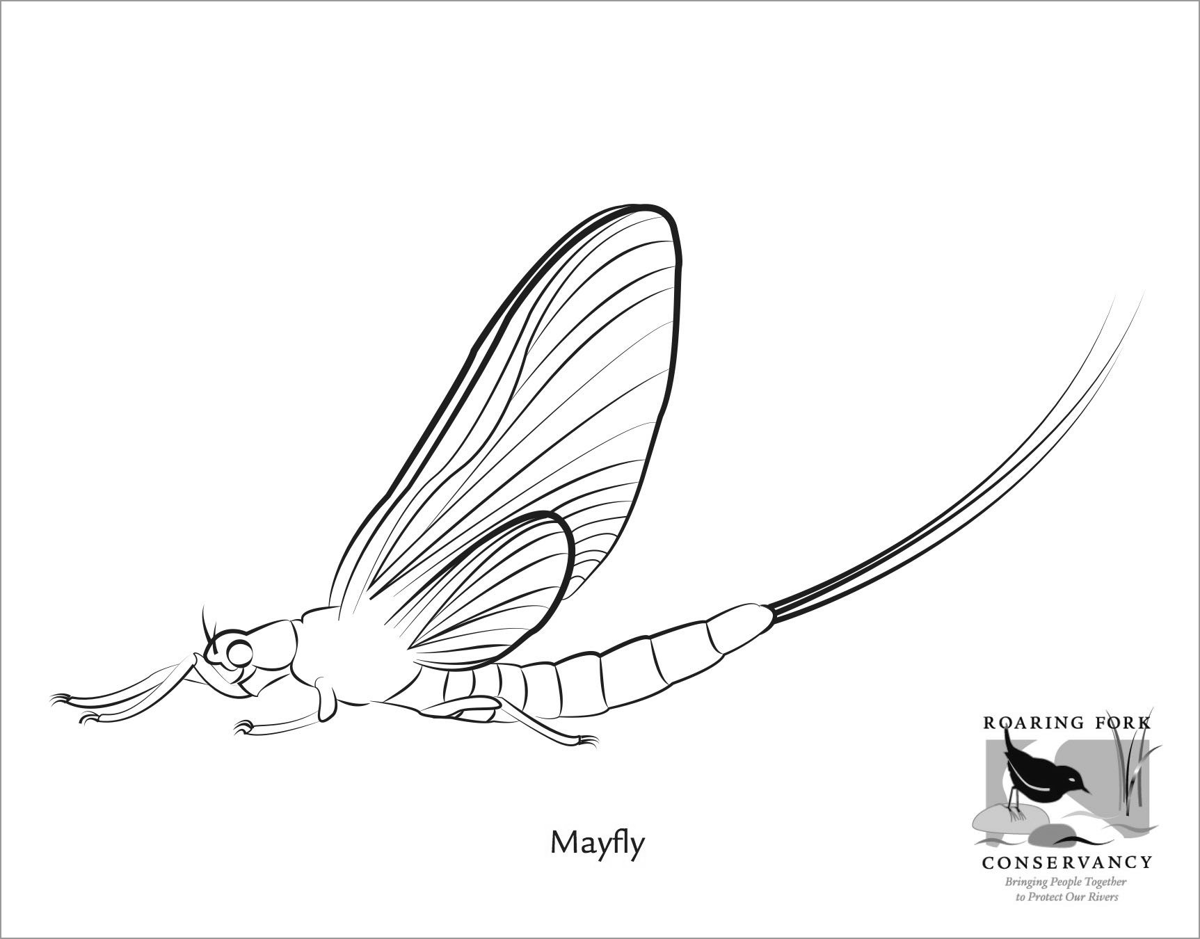 Mayfly Coloring Page for Kids