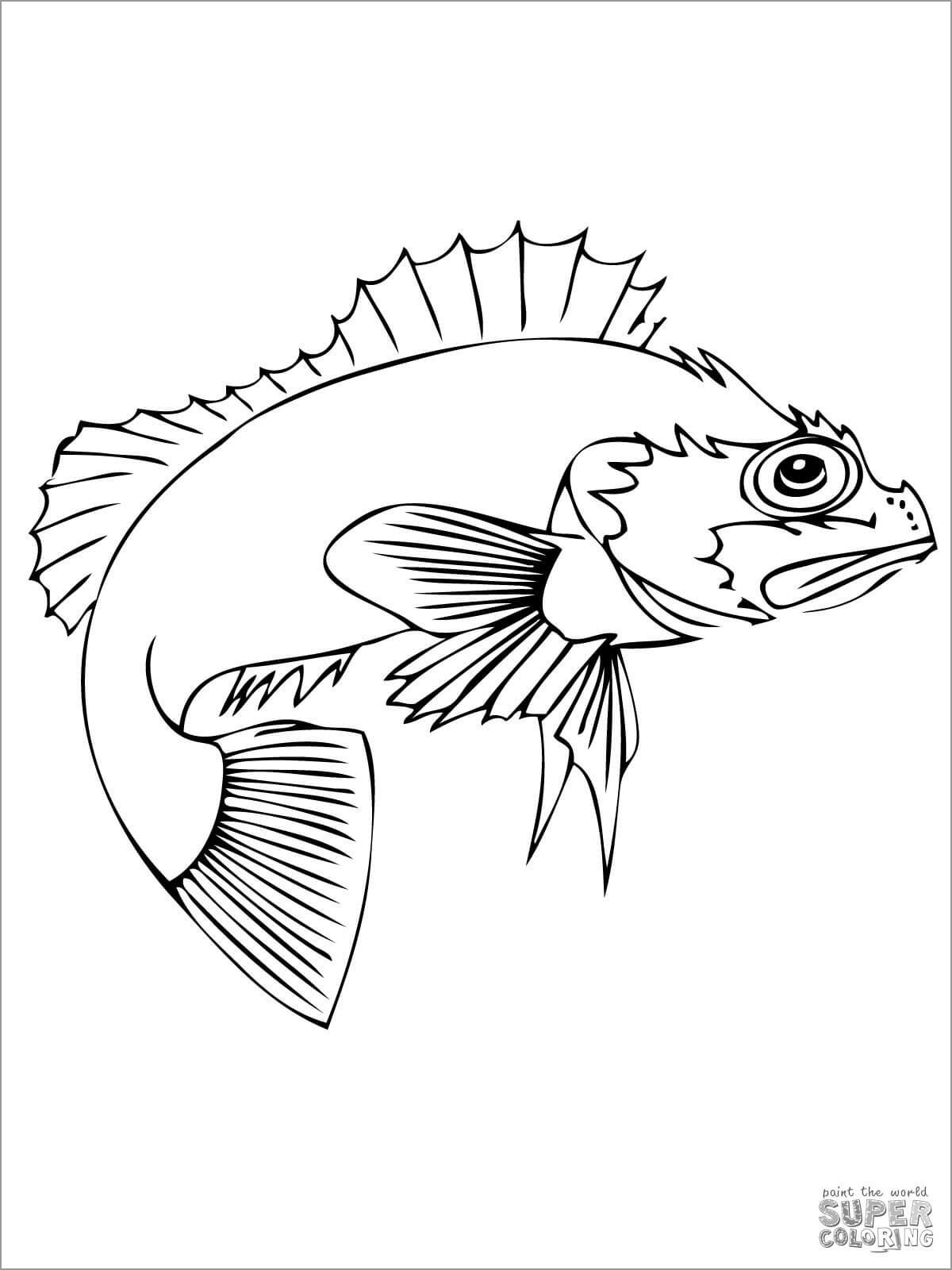Ocean Perch Coloring Page