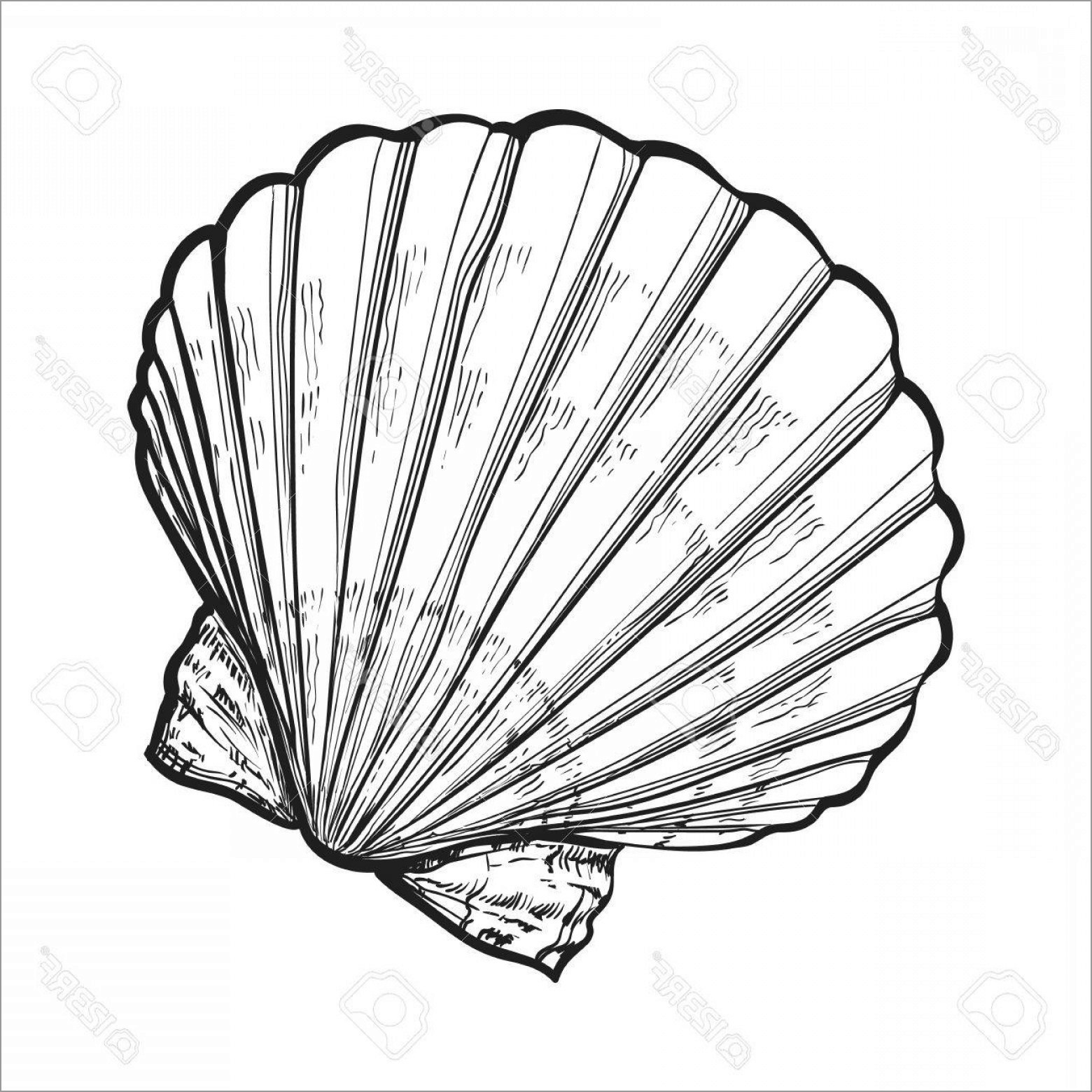 Open Clam Shell Coloring Page