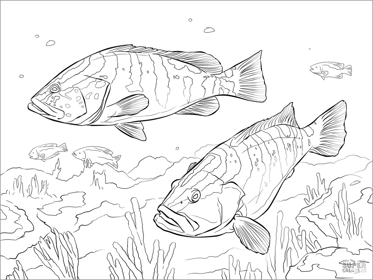 Perch Coloring Page for Kids