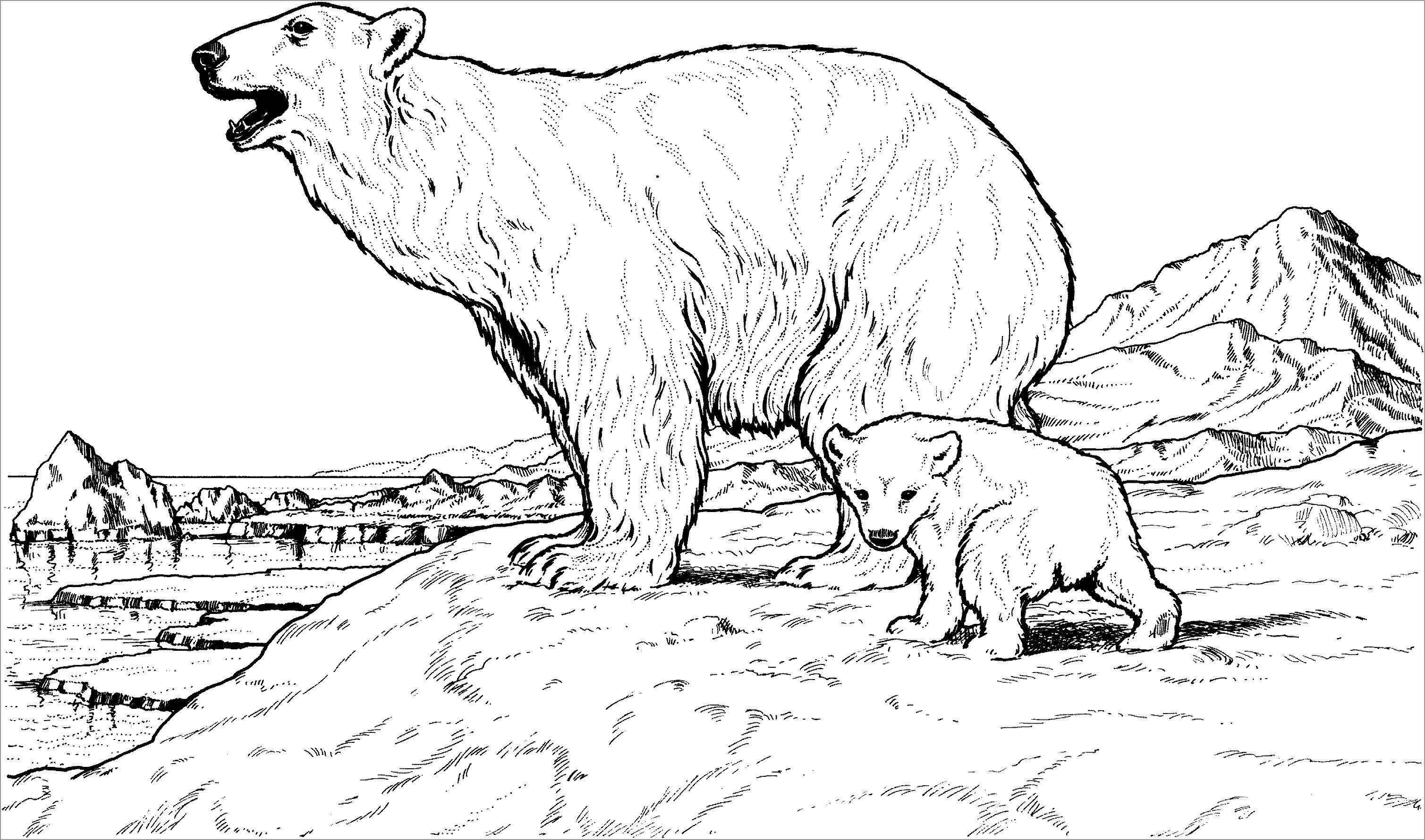 Polar Bear Coloring Page