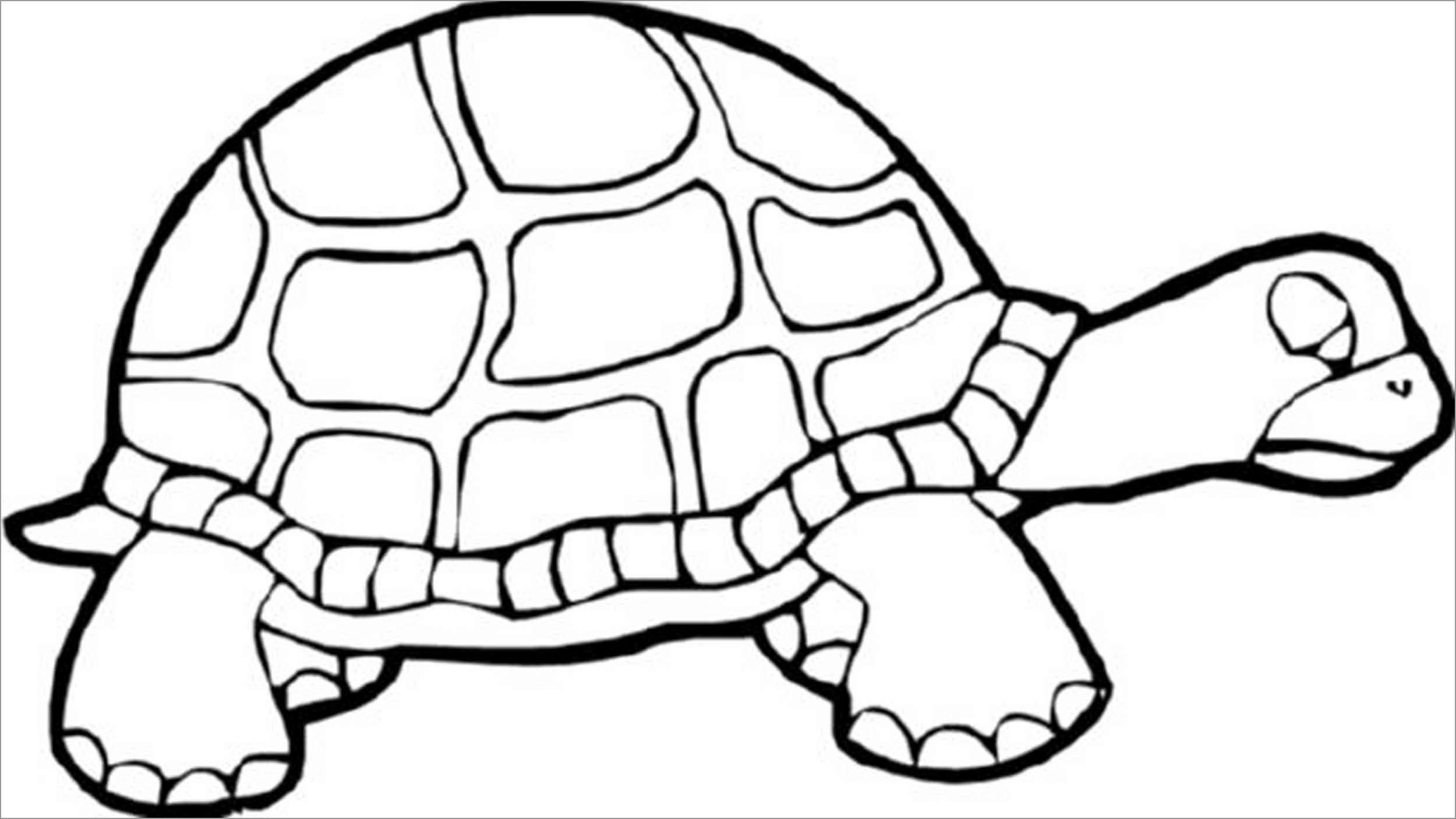 Prek Turtle Coloring Page
