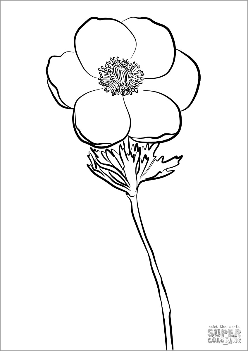 Printable Anemone Coloring Page