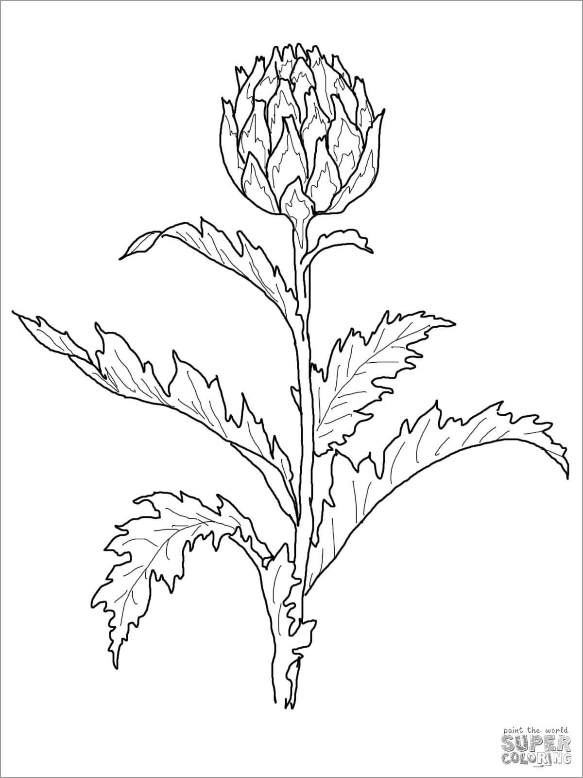 Printable Artichoke Coloring Page