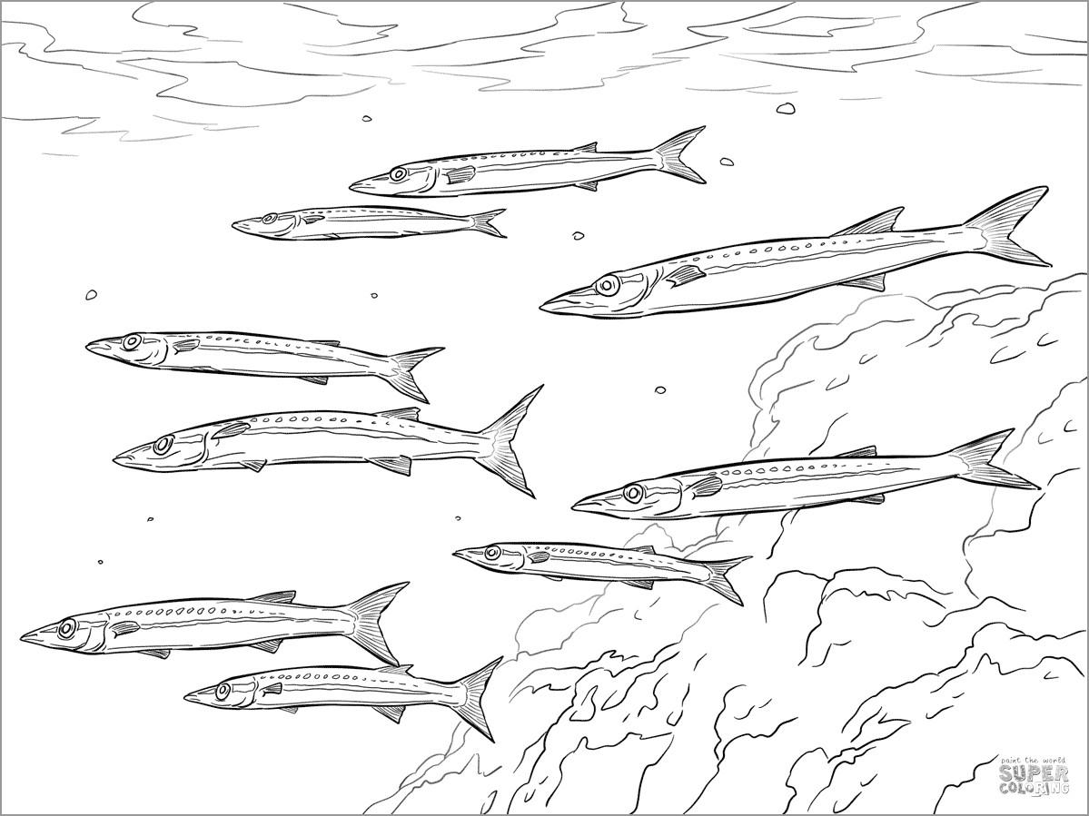 Printable Barracudas Coloring Page