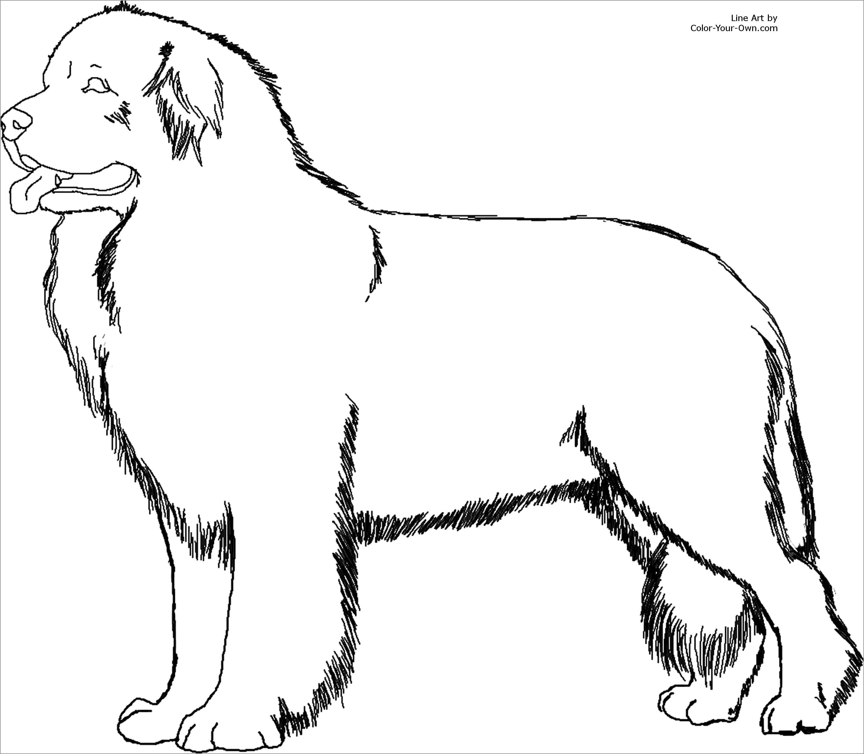 Printable Labrador Coloring Page