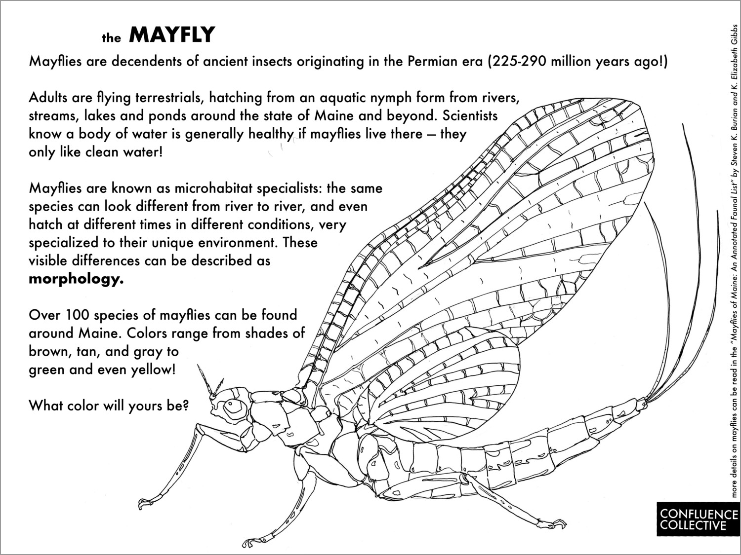 Printable Mayfly Coloring Page for Adult