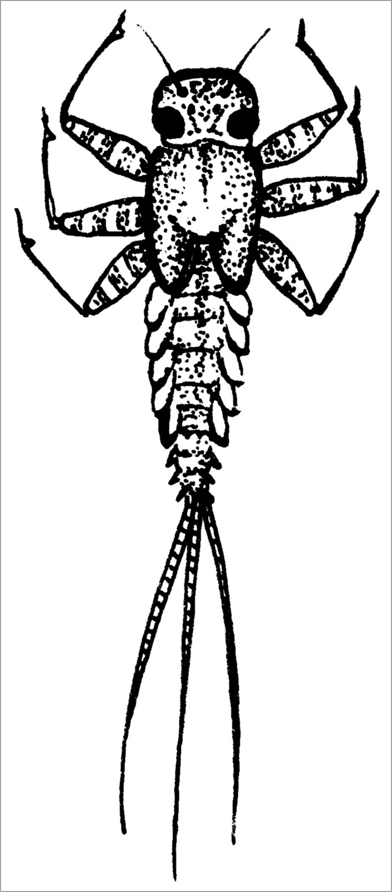 Printable Mayfly Coloring Page