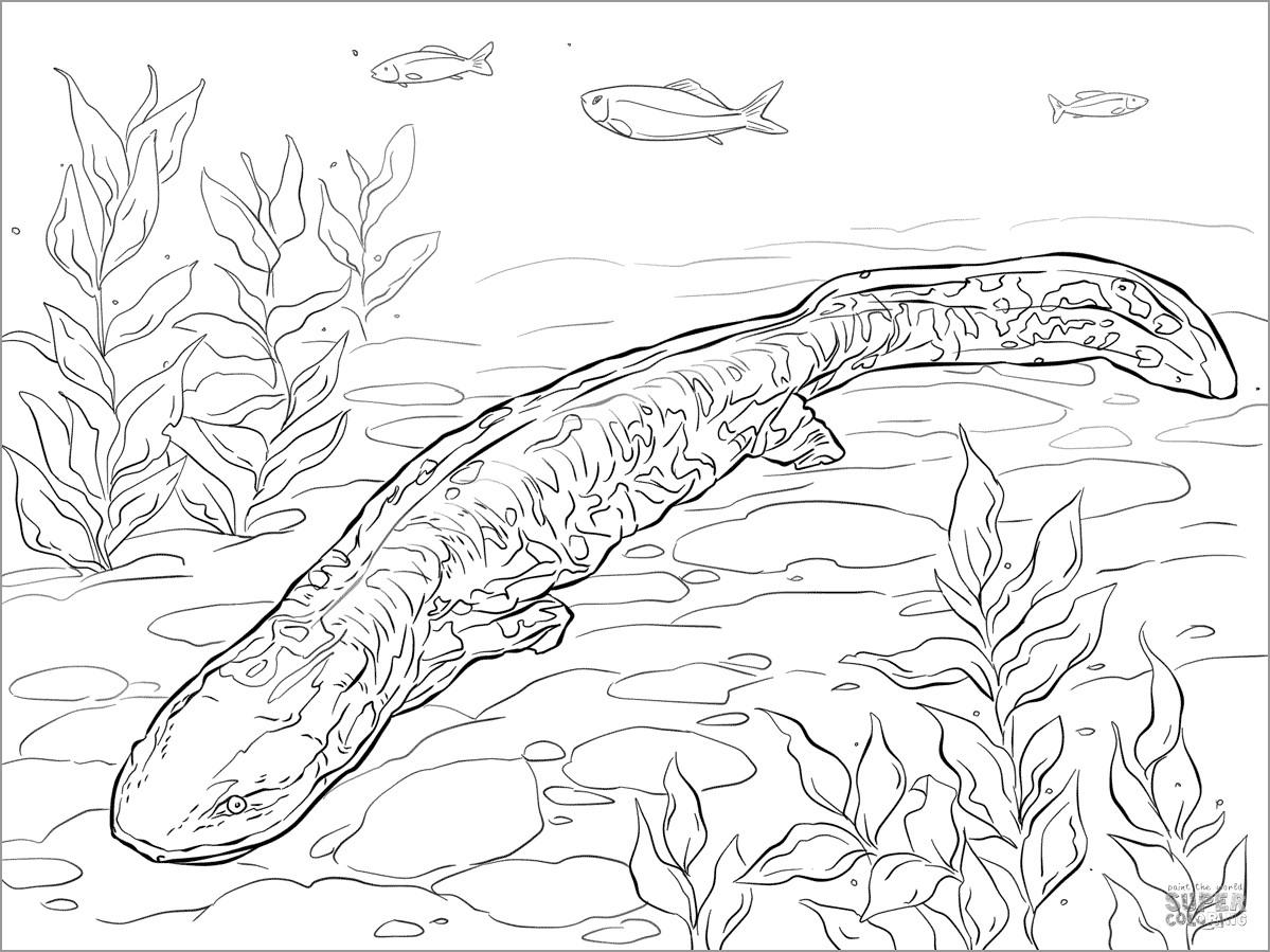 Printable Salamander Coloring Page