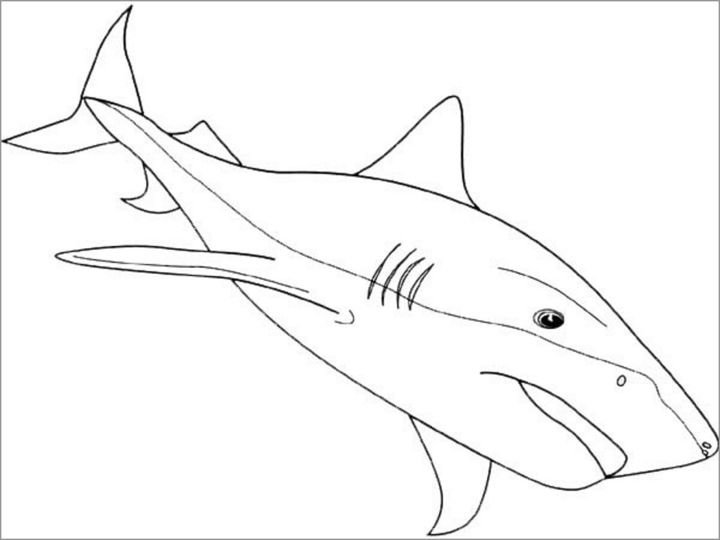 Printable Shark Coloring Page for Kindergarten