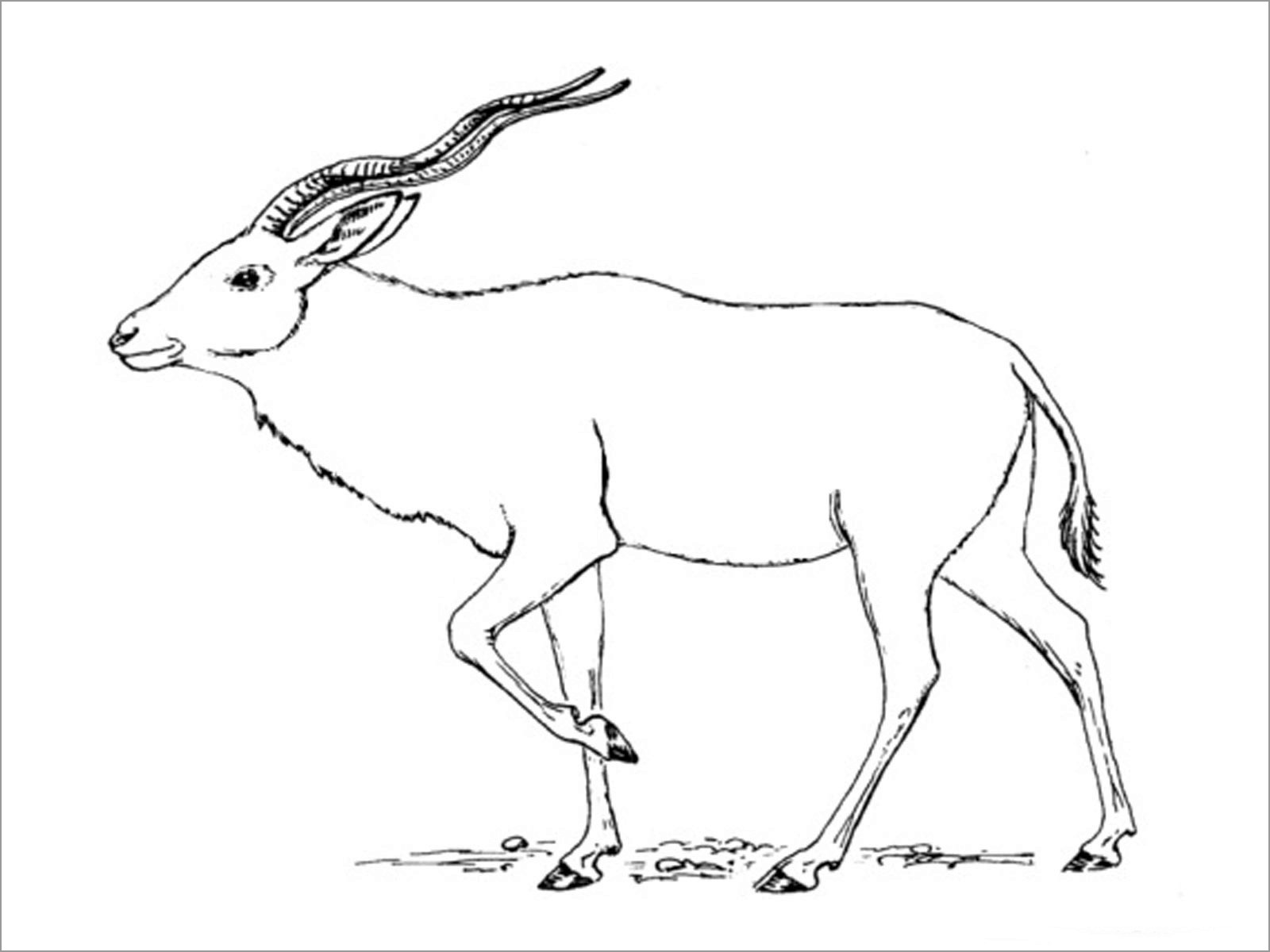 Printable Walking Antelopes Coloring Page