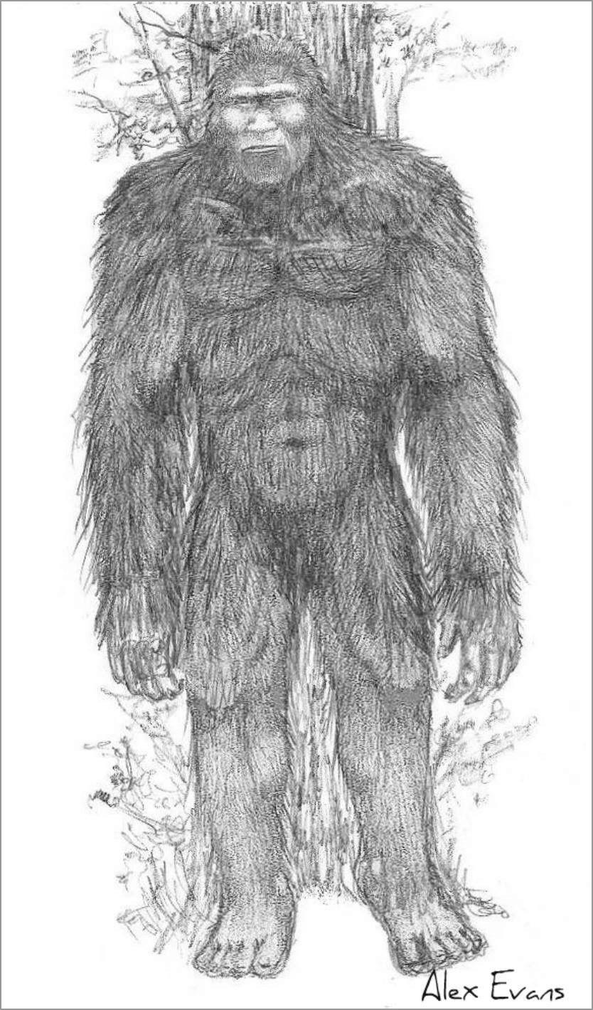 Realistic Bigfoot Coloring Page