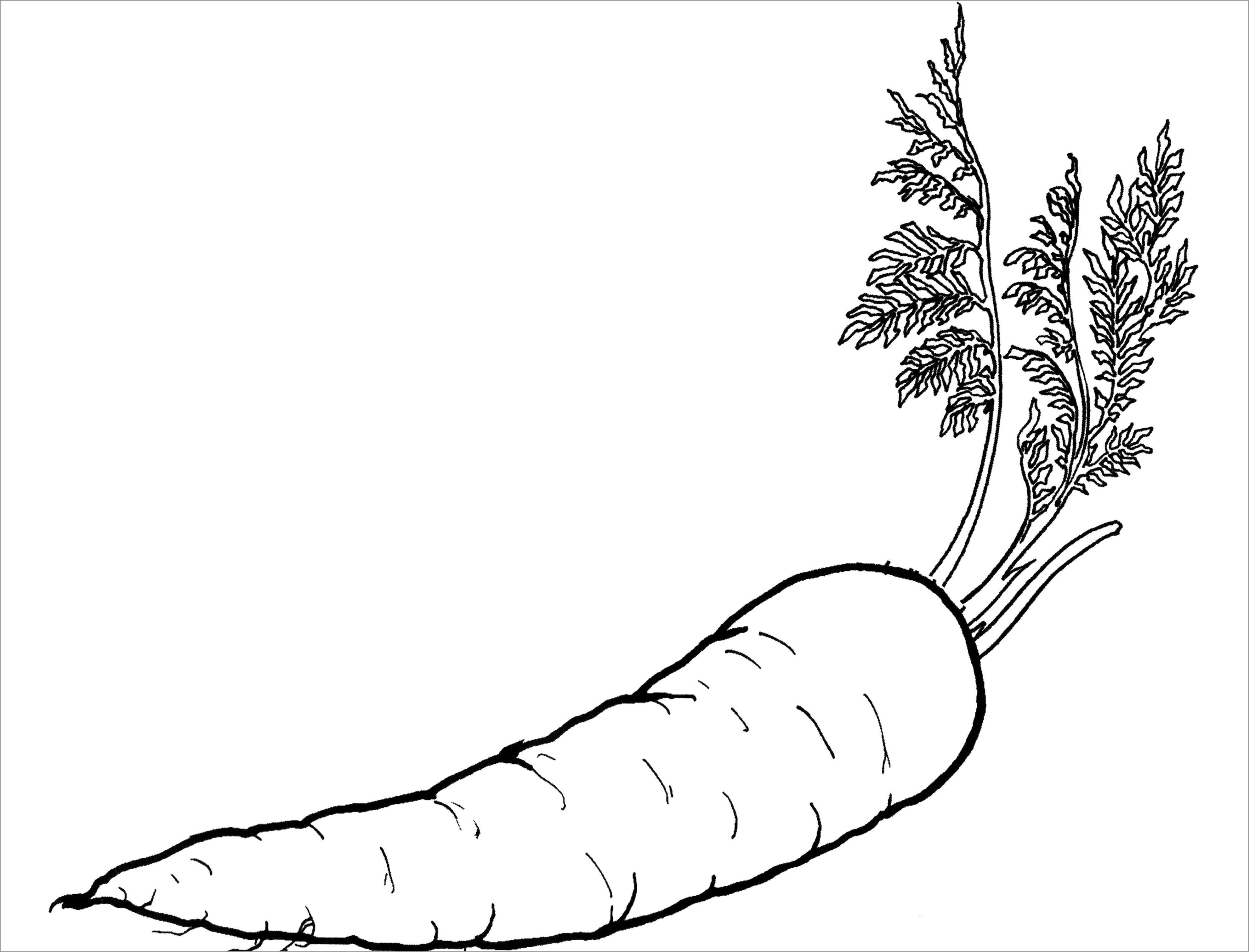 Realistic Carrots Coloring Page