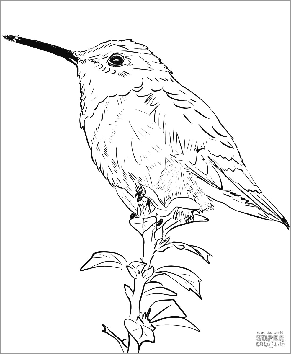 Realistic Hummingbird Coloring Page
