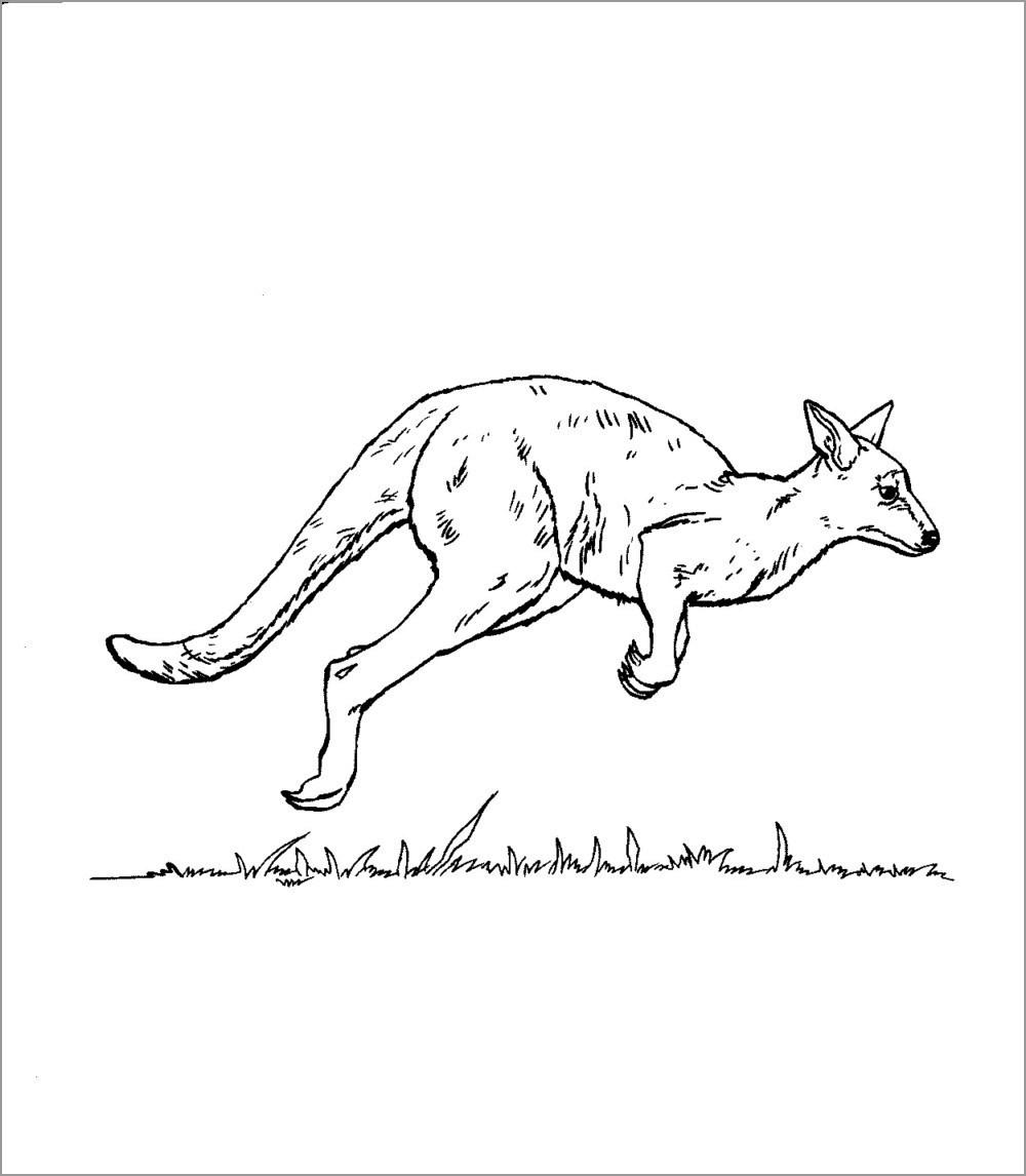 Realistic Kangaroo Coloring Page